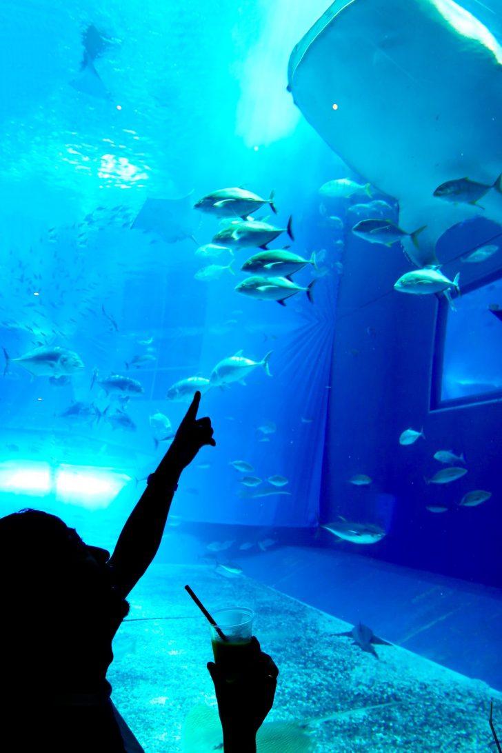 美ら海水族館カフェオーシャンブルー