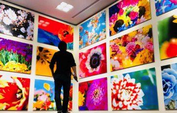 蜷川実花展「虚構と現実の間に」豊川市桜ヶ丘ミュージアム